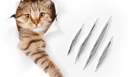 DIY: Arranhador para Gatos!
