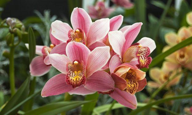 Jardinagem: Orquídeas sempre lindas